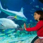 SAVE 35% ON MELBOURNE AQUARIUM TICKETS + KIDS EAT FREE!