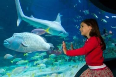 35% discount on melbourne aquarium tickets